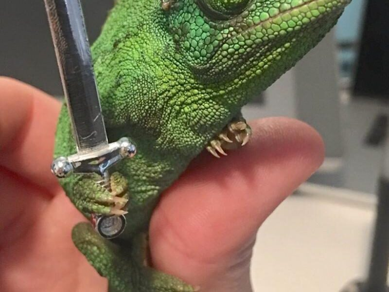Chameleons Holding Tiny Weapons Is The Best Thing To Come Out Of 2020